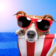 dog in sunglasses sunbathing representing the summer slowdown many clinicians experience. Learn how to improve your SEO and get to the top of Google with these tips