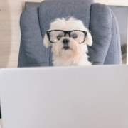 Cute dog in glasses sitting behind a laptop representing blogging for SEO. Learn more form an SEO specialist at Simplified SEO Consulting.